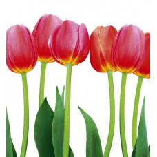 BED OF TULIPS  (MS-3-0126)